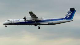 cathay451さんが、伊丹空港で撮影した全日空 DHC-8-402Q Dash 8の航空フォト(飛行機 写真・画像)