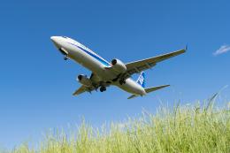 きゅうさんが、伊丹空港で撮影した全日空 737-881の航空フォト(飛行機 写真・画像)