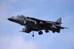 Aurora56さんが、厚木飛行場で撮影したアメリカ海兵隊 AV-8B Harrier II+の航空フォト(写真)