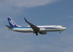 渚のカセットさんが、那覇空港で撮影した全日空 737-881の航空フォト(写真)