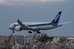 yabyanさんが、那覇空港で撮影した全日空 787-8 Dreamlinerの航空フォト(写真)