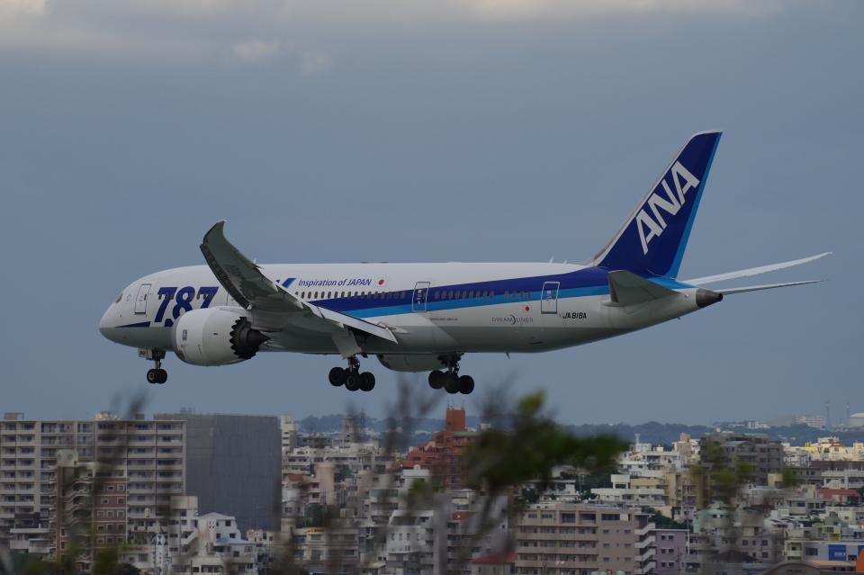 yabyanさんの全日空 Boeing 787-8 Dreamliner (JA818A) 航空フォト