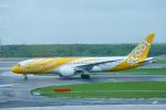 パンダさんが、新千歳空港で撮影したスクート (〜2017) 787-8 Dreamlinerの航空フォト(飛行機 写真・画像)