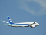 Simさんが、羽田空港で撮影した全日空 787-9の航空フォト(写真)