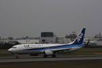 hiroki-JA8674さんが、伊丹空港で撮影した全日空 737-881の航空フォト(飛行機 写真・画像)