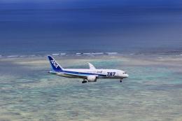 SKY KOCHIさんが、新石垣空港で撮影した全日空 787-8 Dreamlinerの航空フォト(写真)