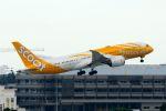 まいけるさんが、ドンムアン空港で撮影したスクート (〜2017) 787-8 Dreamlinerの航空フォト(写真)