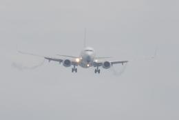 たつぼんさんが、松山空港で撮影した日本航空 737-846の航空フォト(写真)