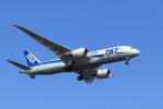 hnd22さんが、羽田空港で撮影した全日空 787-8 Dreamlinerの航空フォト(写真)