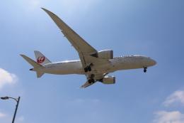 DREAMWINGさんが、ロサンゼルス国際空港で撮影した日本航空 787-8 Dreamlinerの航空フォト(飛行機 写真・画像)