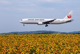 りんたろうさんが、女満別空港で撮影した日本航空 767-346の航空フォト(飛行機 写真・画像)