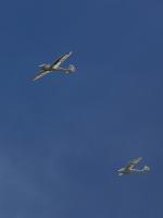 T-ORIさんが、たきかわスカイパークで撮影した日本法人所有 Mg19 Steinadlerの航空フォト(写真)