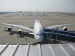 くまのんさんが、中部国際空港で撮影したタイ国際航空 A380-841の航空フォト(飛行機 写真・画像)