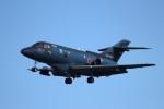 TRdenさんが、名古屋飛行場で撮影した航空自衛隊 U-125A(Hawker 800)の航空フォト(写真)