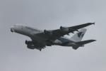 RAOUさんが、成田国際空港で撮影したマレーシア航空 A380-841の航空フォト(写真)