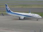 くまのんさんが、中部国際空港で撮影した全日空 737-881の航空フォト(写真)