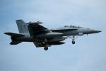 チャッピー・シミズさんが、厚木飛行場で撮影したアメリカ海軍 EA-18G Growlerの航空フォト(写真)