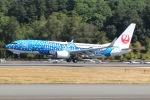 JRF spotterさんが、ボーイングフィールドで撮影した日本トランスオーシャン航空 737-8Q3の航空フォト(写真)