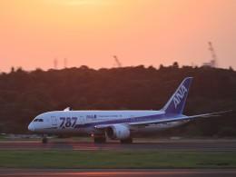 のり巻きさんが、成田国際空港で撮影した全日空 787-8 Dreamlinerの航空フォト(写真)