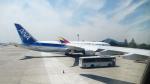 ティーガーさんが、金浦国際空港で撮影した全日空 787-8 Dreamlinerの航空フォト(写真)