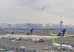 mahiちゃんさんが、羽田空港で撮影したサウジアラビア王国政府 747-468の航空フォト(写真)