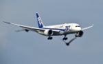 kamerajiijiさんが、羽田空港で撮影した全日空 787-8 Dreamlinerの航空フォト(写真)