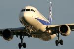 たけをさんが、伊丹空港で撮影した全日空 A320-211の航空フォト(写真)
