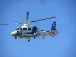 kamonhasiさんが、静岡ヘリポートで撮影したオールニッポンヘリコプター AS365N2 Dauphin 2の航空フォト(写真)