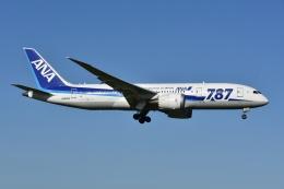 よしポンさんが、成田国際空港で撮影した全日空 787-8 Dreamlinerの航空フォト(写真)