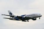 こだしさんが、成田国際空港で撮影したマレーシア航空 A380-841の航空フォト(写真)