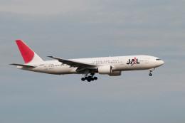 ポン太さんが、羽田空港で撮影した日本航空 777-246の航空フォト(飛行機 写真・画像)
