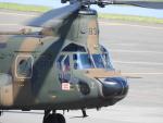 tetuさんが、札幌飛行場で撮影した陸上自衛隊 CH-47JAの航空フォト(写真)
