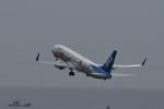 Dream2016さんが、中部国際空港で撮影した全日空 737-881の航空フォト(写真)