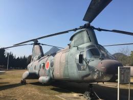 daifuku200LRさんが、善通寺駐屯地で撮影した陸上自衛隊 KV-107II-4の航空フォト(飛行機 写真・画像)