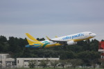 meijeanさんが、成田国際空港で撮影したセブパシフィック航空 A320-214の航空フォト(写真)