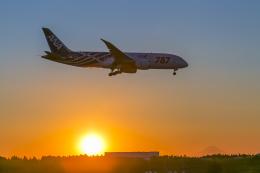 mameshibaさんが、成田国際空港で撮影した全日空 787-8 Dreamlinerの航空フォト(写真)