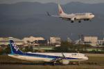 こーき747さんが、小松空港で撮影した日本航空 737-846の航空フォト(写真)
