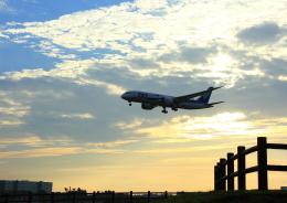 タミーさんが、成田国際空港で撮影した全日空 787-8 Dreamlinerの航空フォト(写真)