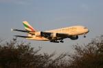 トラッキーさんが、成田国際空港で撮影したエミレーツ航空 A380-861の航空フォト(写真)
