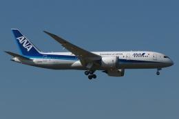 木人さんが、成田国際空港で撮影した全日空 787-8 Dreamlinerの航空フォト(写真)