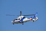 フォークリフト操縦士さんが、仙台空港で撮影したオールニッポンヘリコプター AS365N2 Dauphin 2の航空フォト(写真)