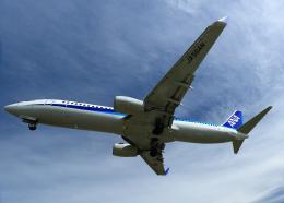 tuckerさんが、伊丹空港で撮影した全日空 737-881の航空フォト(飛行機 写真・画像)