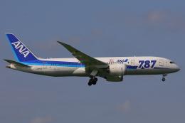じゃりんこさんが、成田国際空港で撮影した全日空 787-8 Dreamlinerの航空フォト(写真)