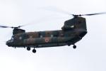 もっはさんが、下総航空基地で撮影した陸上自衛隊 CH-47JAの航空フォト(写真)