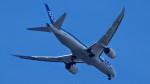 あるふぁさんが、伊丹空港で撮影した全日空 787-8 Dreamlinerの航空フォト(写真)