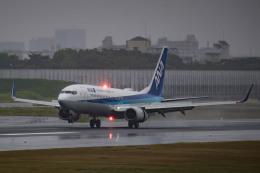 tecasoさんが、伊丹空港で撮影した全日空 737-881の航空フォト(飛行機 写真・画像)