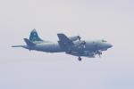 misaoiさんが、厚木飛行場で撮影したオーストラリア空軍 AP-3C Orionの航空フォト(写真)