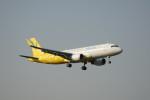 senbaさんが、成田国際空港で撮影したバニラエア A320-214の航空フォト(写真)