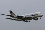 やつはしさんが、成田国際空港で撮影したシンガポール航空 A380-841の航空フォト(写真)