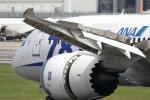 Koenig117さんが、伊丹空港で撮影した全日空 787-8 Dreamlinerの航空フォト(写真)